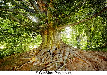 绿色, 老树