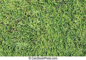 绿色, 苔藓
