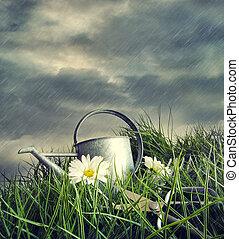缶, 花, 水まき, 雨, 夏