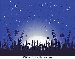 罌粟, 草地, 夜晚