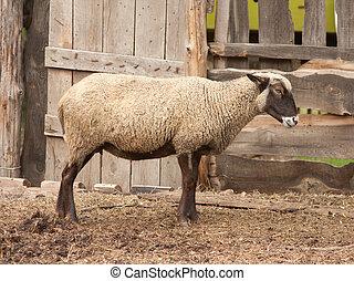 羊農場, 霧