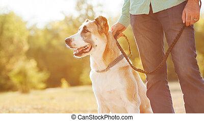 羊飼い, 中央である, 犬の歩行, park., アジア人, leash., もつ, 人, 彼