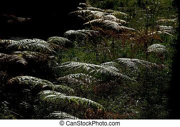 羊齒科植物, 發光, 在暗處
