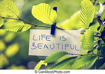 美しい生活