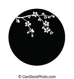 美しい, さくらんぼ, 円, ブランチ, 花