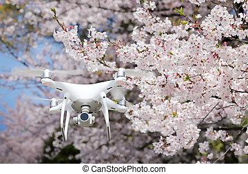 美しい, さくらんぼ, 無人機, 花