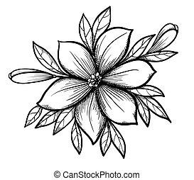 美しい, つぼみ, グラフィック, 葉, flowers., ブランチ, ユリ, 図画