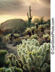 美しい, アリゾナ, 砂漠, 位置