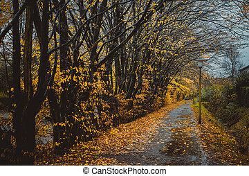 美しい, アリー, 中に, a, 公園, ∥で∥, lanterns., 葉, 秋, 秋, 自然, 背景
