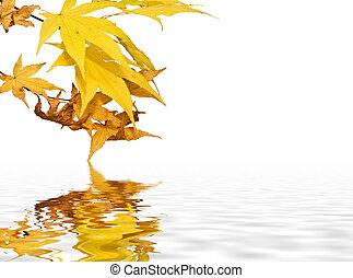 美しい, イメージ, 秋, 明るい, 背景, 秋, 新たに