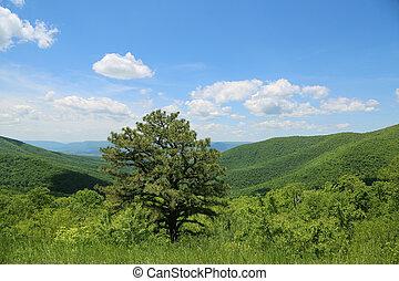 美しい, ウェストヴァージニア