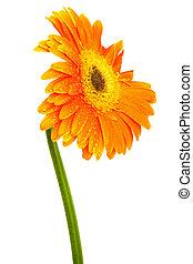美しい, オレンジの花