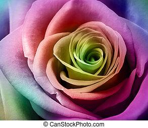 美しい, カラフルである, バラ