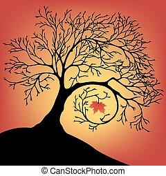 美しい, シルエット, 大きい木, 1(人・つ), 黒, 葉