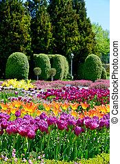 美しい, チューリップ, 植物園