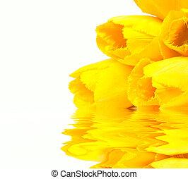 美しい, チューリップ, 水, 反映, 春の花