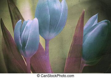 美しい, チューリップ, 花, 背景, textured