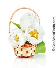 美しい, チューリップ, 隔離された, バスケット, 白い花