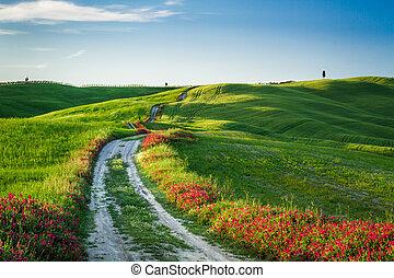 美しい, トスカーナ, フィールド, 緑, 日没, 牧草地, 光景