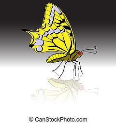 美しい, トロピカル, ベクトル, illustration., butterfly.