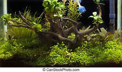 美しい, トロピカル, 植えられた, 緑, 水族館, 淡水