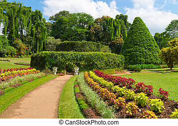 美しい, トロピカル, 植物園