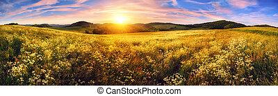 美しい, パノラマ, 日没, 牧草地, カラフルである