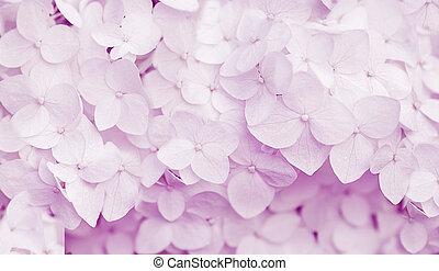 美しい, ビオラ, アジサイ, 色, 背景, 花