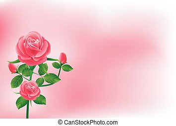 美しい, ピンクは 上がった