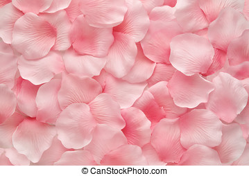 美しい, ピンクは 上がった, デリケートである, 花弁