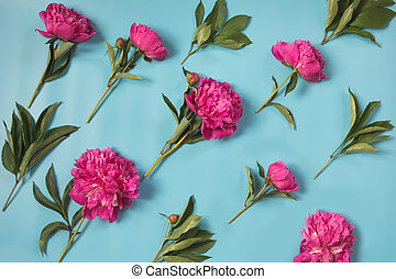 美しい, ピンク, シャクヤク, 花, 上に, punchy, パステル, 青, によって, diagonal., コピー, space., 上, ビュー。, 平ら, lay.