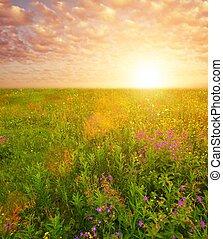 美しい, フィールド, 上に, 花, 空