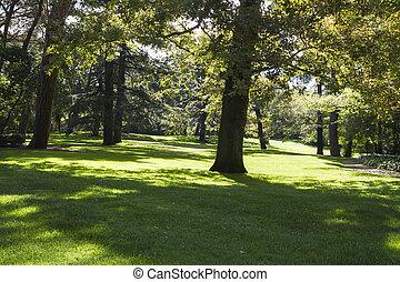 美しい, ブランチ, 葉が多い, 公園, 木