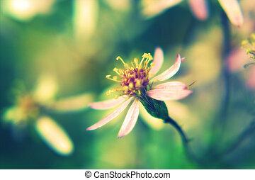 美しい, マクロ, 花, 中に, retro 様式
