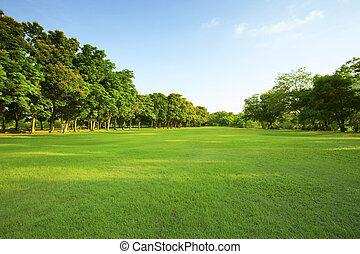 美しい, ライト, 公園, 朝, フィールド, 緑の草, 公衆