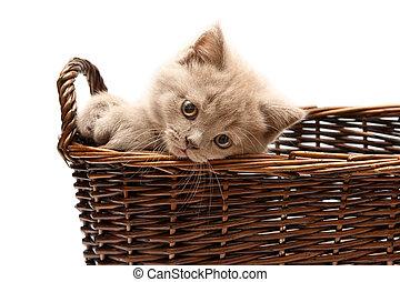 美しい, ライラック, 子ネコ, 中に, a, バスケット