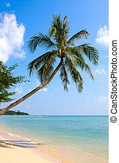 美しい, 上に, 木, 砂, やし, 白い浜