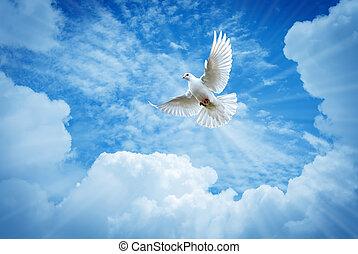 美しい, 信頼, シンボル, 青い空, 鳩