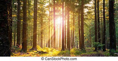 美しい, 光線, 無声, 春, 明るい, 森林, 太陽
