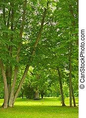 美しい, 公園, 光景