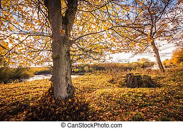 美しい, 公園, 木, 秋, 威厳がある, 川
