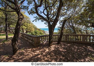 美しい, 公園, 松の木
