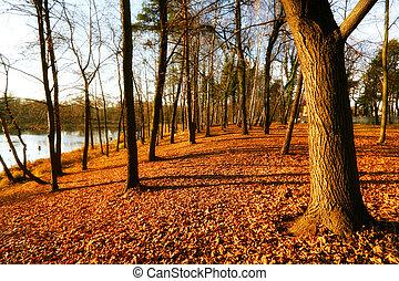 美しい, 公園, 秋