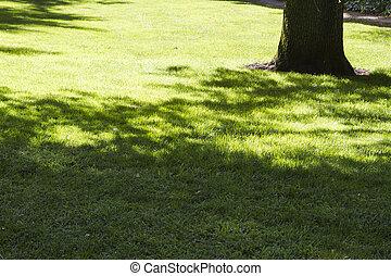 美しい, 公園, 葉が多い, フィールド, 木