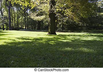 美しい, 公園, 葉が多い, 木, 日光