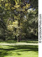 美しい, 公園, 風景, 葉が多い, 木