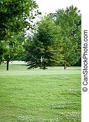美しい, 公園, geen, 草, そして, 木, 背景, コピースペース