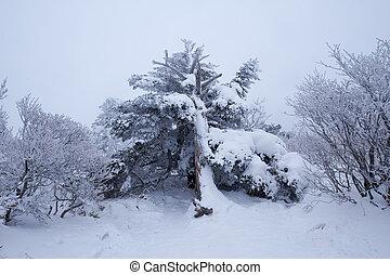 美しい, 冬, 南朝鮮, mt.deogyusan, 風景