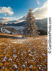 美しい, 冬, 雪, 木, カバーされた, 風景