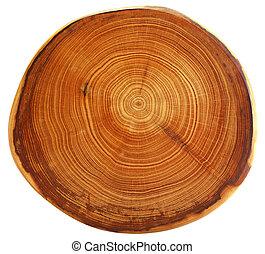 美しい, 切口, の, 木